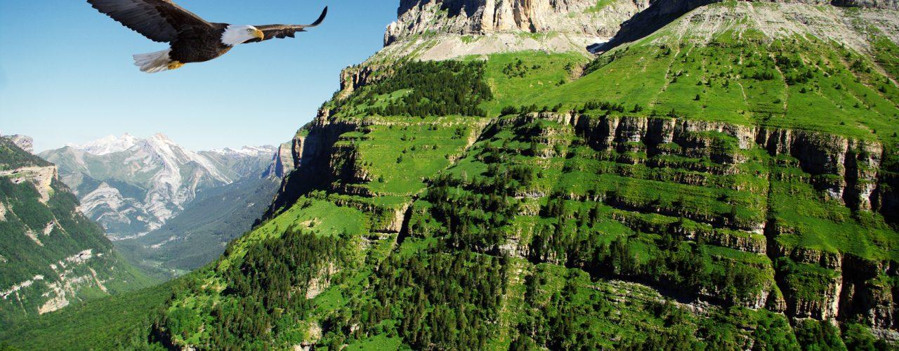 eagle in Ordessa Valley