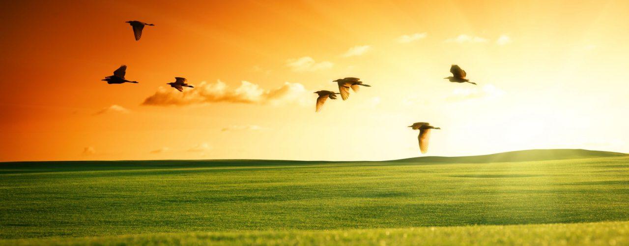 sonnenuntergang mit Vögel